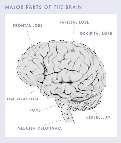 The presenting clinical features of brain tumors depend on certain